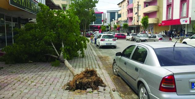 Kahramanmaraş'ta fırtına çatıları uçurup, ağaçları devirdi