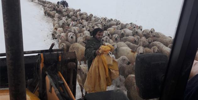 Mahsur kalan yaylacılar ve koyun sürüleri kurtarıldı