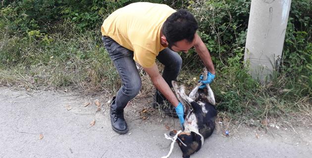 Kahramanmaraş'ta tüfekle ateş edilen köpek yaralandı