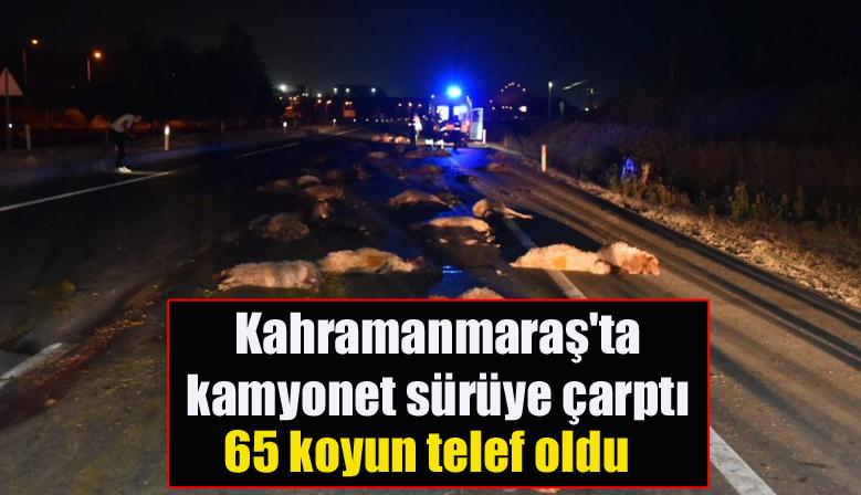 Kahramanmaraş'ta kamyonet sürüye çarptı