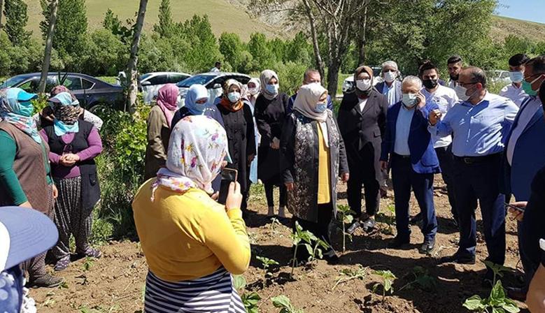Öçal, Afşin'deki aromatik bitki bahçelerini inceledi