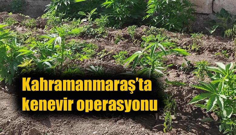 Kahramanmaraş'ta Jandarmadan kenevir operasyonu