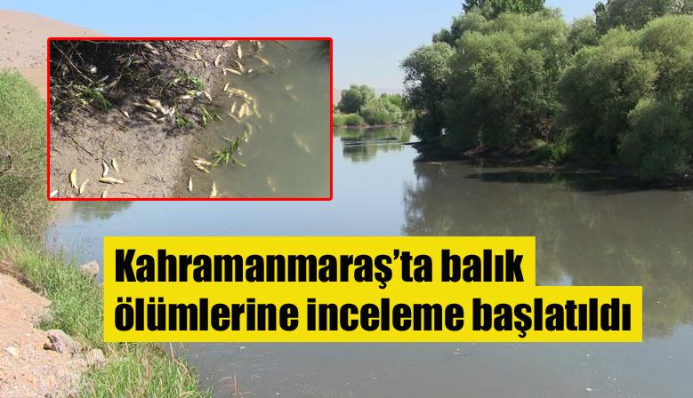 Kahramanmaraş'ta balık ölümlerine inceleme başlatıldı