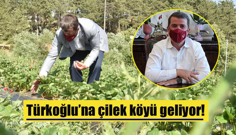 Türkoğlu'na çilek köyü geliyor!