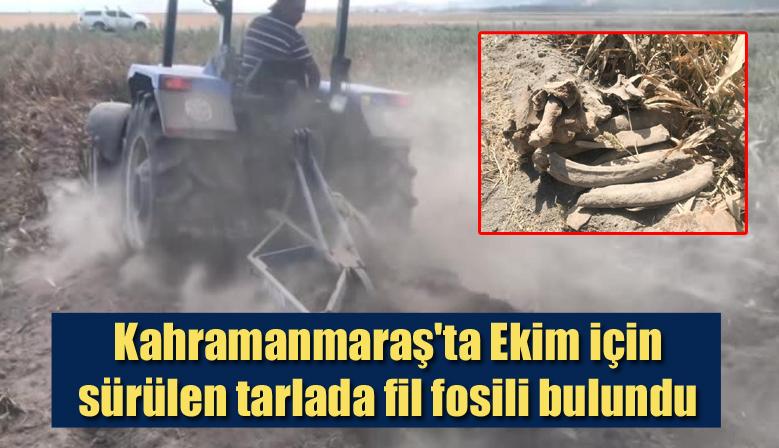 Kahramanmaraş'ta Ekim için sürülen tarlada fil fosili bulundu