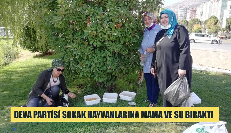 DEVA PARTİSİ SOKAK HAYVANLARINA MAMA VE SU BIRAKTI